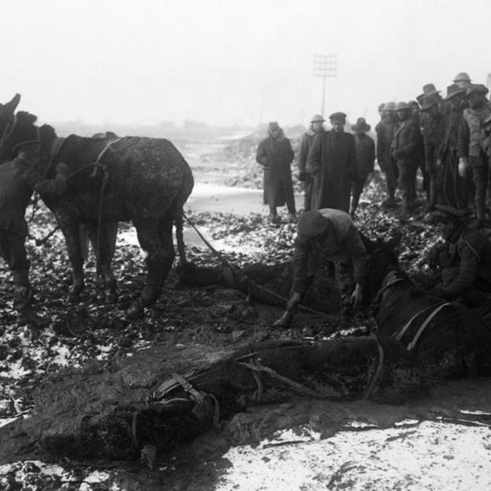 [Soldats anglais essayant de sortir des mules de la boue, près du bois de Bernafay, le 25 décembre 1916]