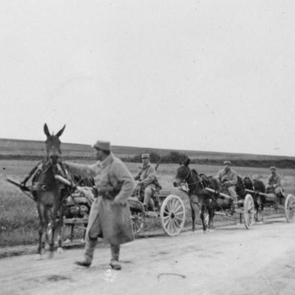 [Mules tirant des mitraillettes du 331ème régiment d'infanterie française près de Verdun, 28 juillet 1915]